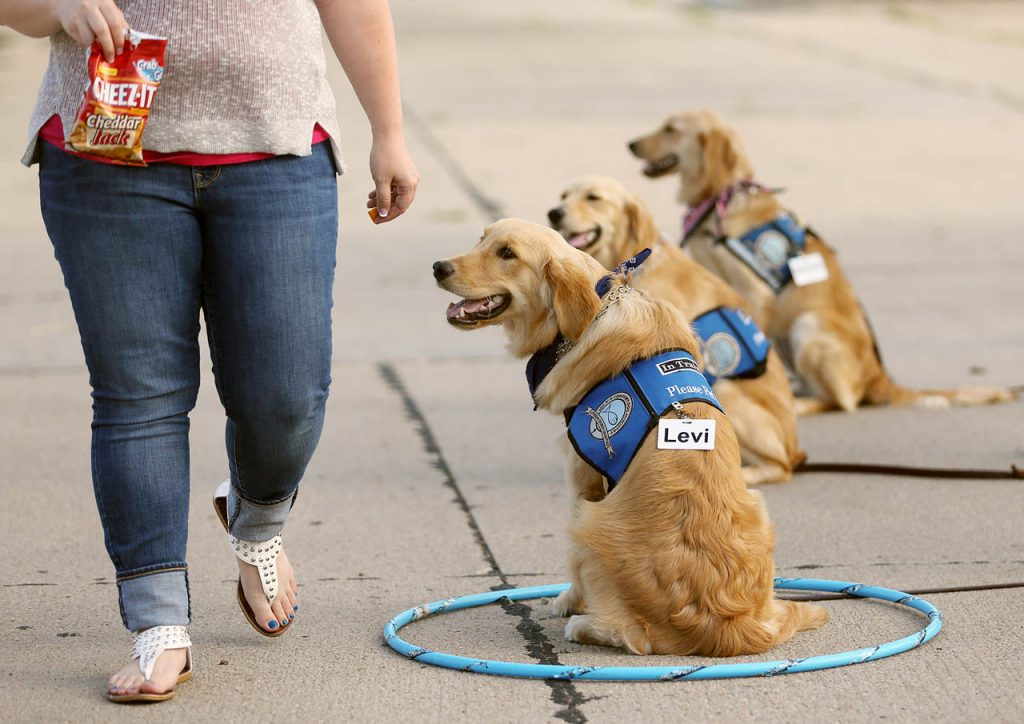 Comfort dog Levi is tempted by Cheez-it crackers, but doesn't move during one of several training exercises in the Peace Lutheran Church parking lot. (Independent/Andrew Carpenean)