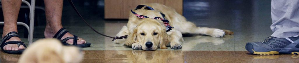 Comfort dog Bethany takes a rest on a tile floor at Peace Lutheran Church.