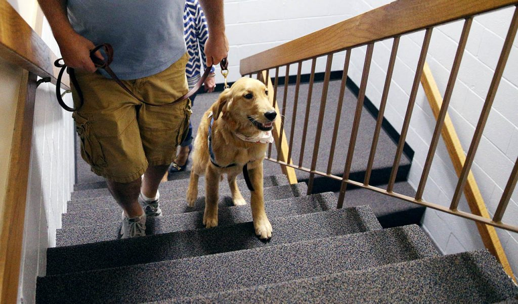 Comfort dog Jude makes it to the top of two flights of stairs during one of several training exercises at Peace Lutheran Church.