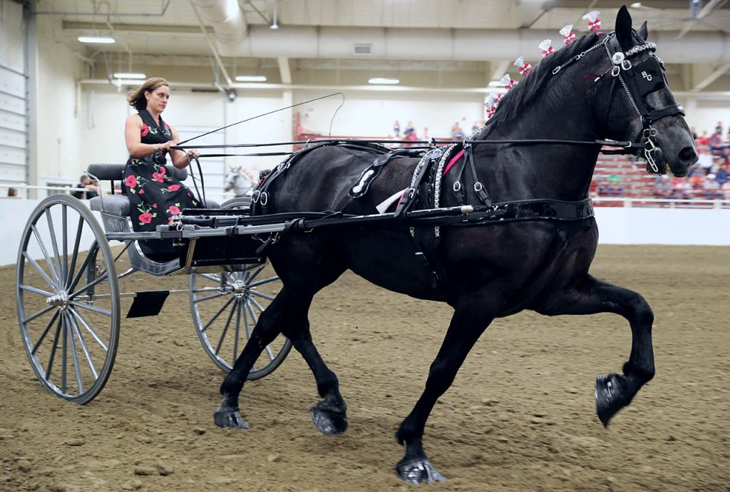 Angela Walsh of North Platte drives the B.G. Stales Hitch during the Draft Horse Cart- Mares competition at Five Points Bank Arena. Walsh won first place at the 2016 Nebraska State Fair.