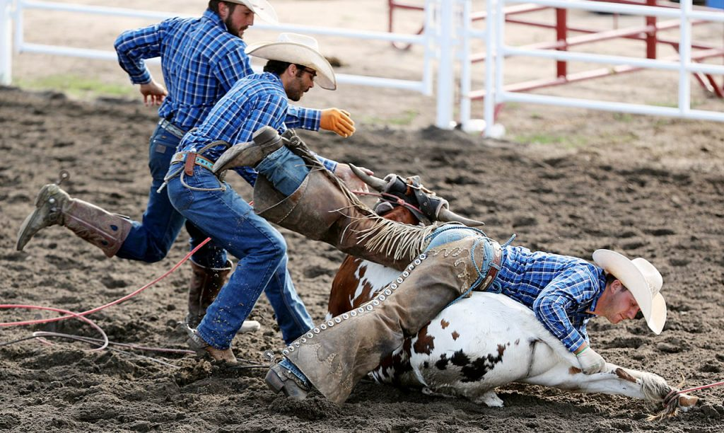A team of cowboys take down a steer during a Ranch Rodeo in the Thompson Foods Open Air Arena.
