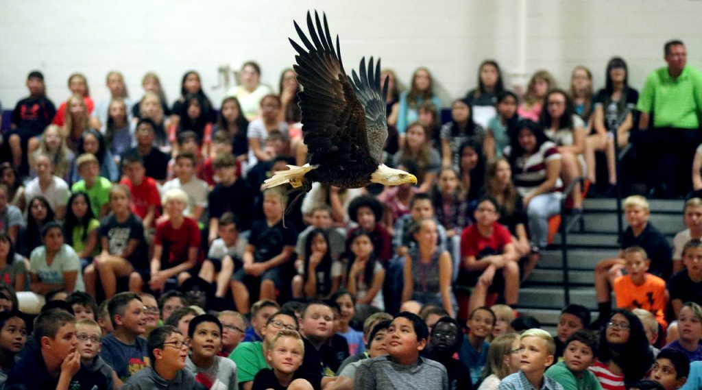 A 27-year-old Bald Eagle named Challenger soars above Barr Middle School students while flying between bird handlers Spencer Williams and Al Cecere during an assembly by the American Eagle Foundation. (This photo was taken at an ISO setting of 25600. The highest ISO I've used and it reproduced nicely in print).