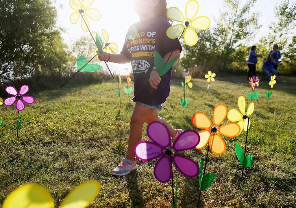 A youngster places pinwheels along the walk route around Eagle Scout Lake during Walk to End Alzheimer's Thursday. (Independent/Andrew Carpenean)