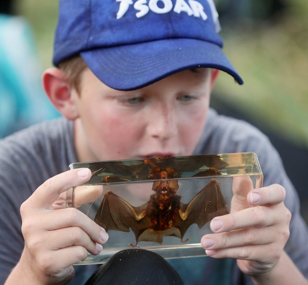 Conner Wademan gets a close up look at a bat at Gjerloff Prairie.