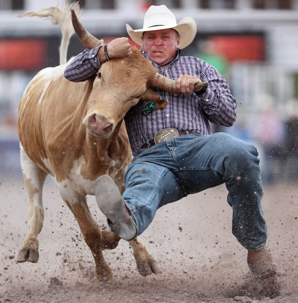 Harley Cole of Calgary, Alberta competes in steer wrestling during a Cheyenne Frontier Days rodeo.