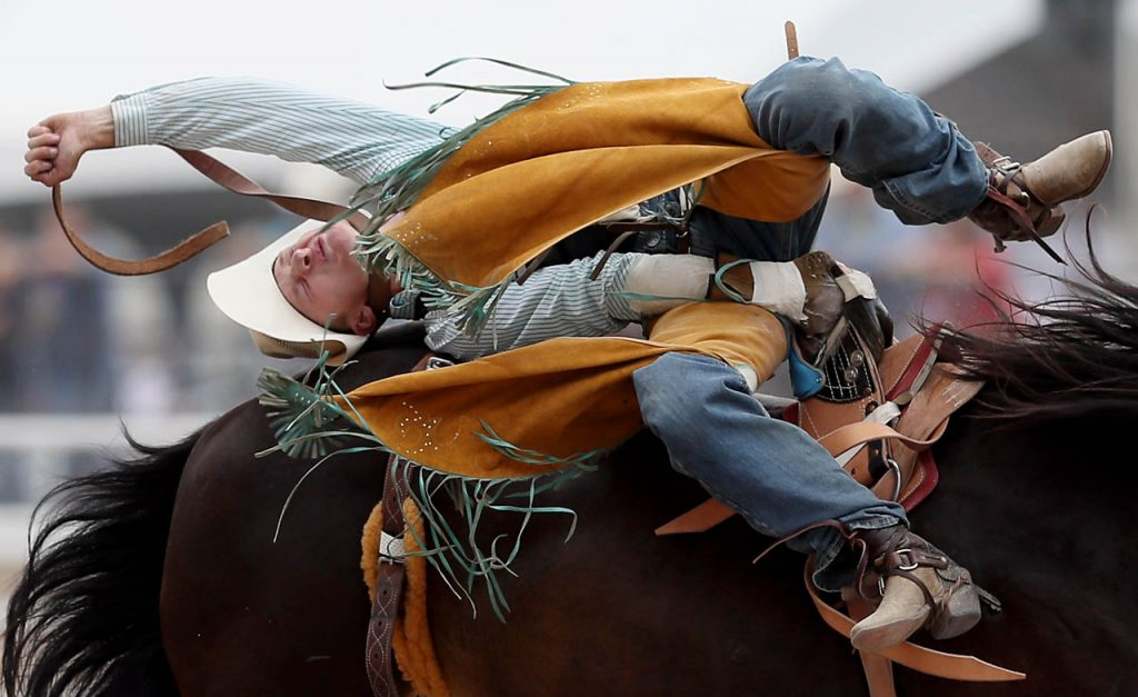 A saddle bronc rider is thrown back while competing during a Cheyenne Frontier Days rodeo.