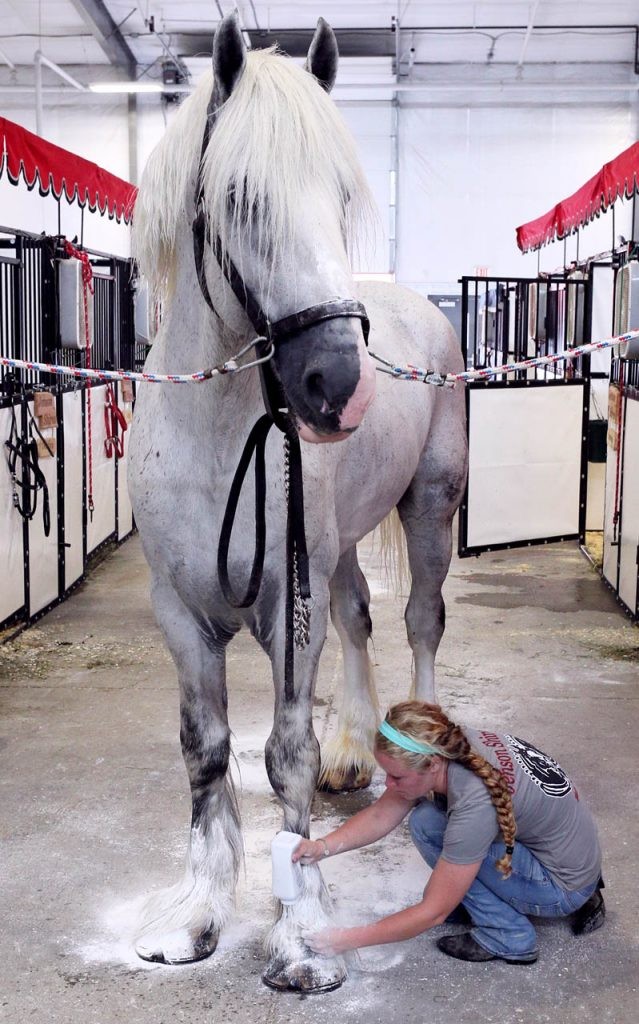 Megan Denny of Bettendorf, Iowa applies baby powder to a Shire's hoofs after it was washed during opening day of the Nebraska State Fair.