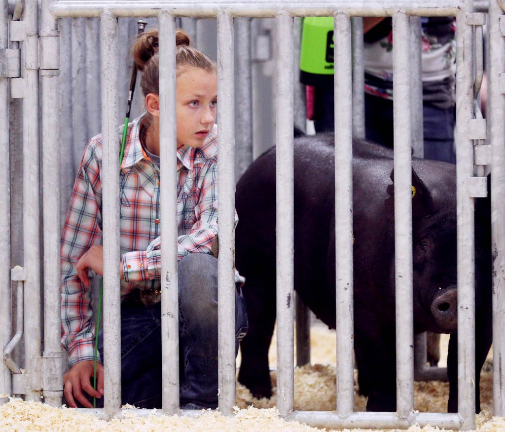 Brooklyn Reynolds of Dodge County watches intermediate swine showmanship inside the Swine Barn at the Nebraska State Fair.