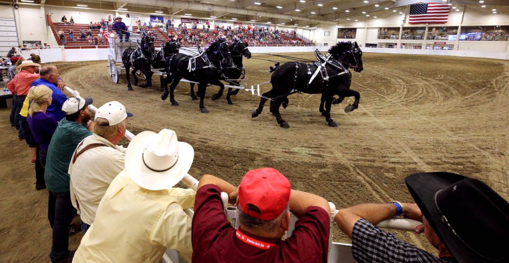 Jason Goodman drives a group of six Perchuron horse on his young living exhibition hitch during the Draft Horse Show.